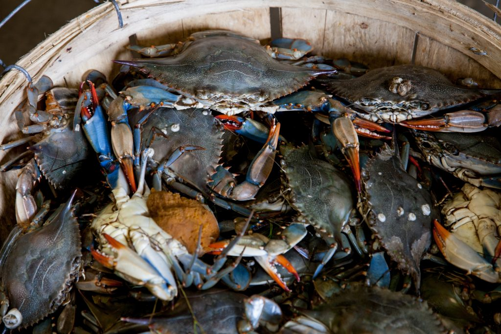Crabs In A Bucket Mentality